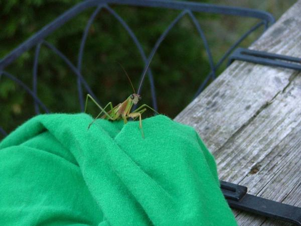 another cricket